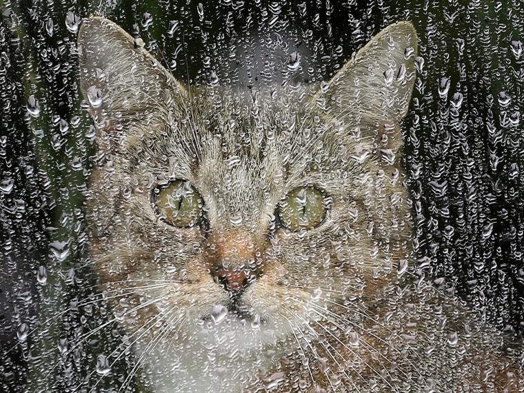 A cat sits behind a rain covered window