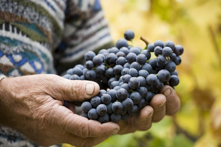 Genetic analyses of Corvina grapes grown throughout the Verona region of Italy have identified genes that could help breeders adapt the fruit to climate change.