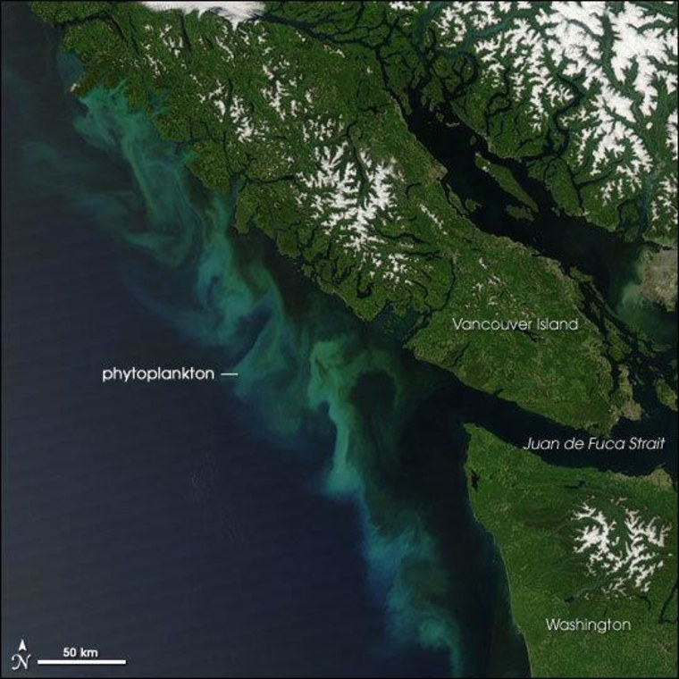 Effingham Inlet is on the Pacific coast of Vancouver Island, where scientists found evidence of past earthquakes.