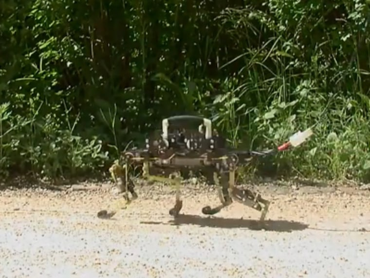 The Cheetah-Cub robot's legs are built like the legs of a real cat.