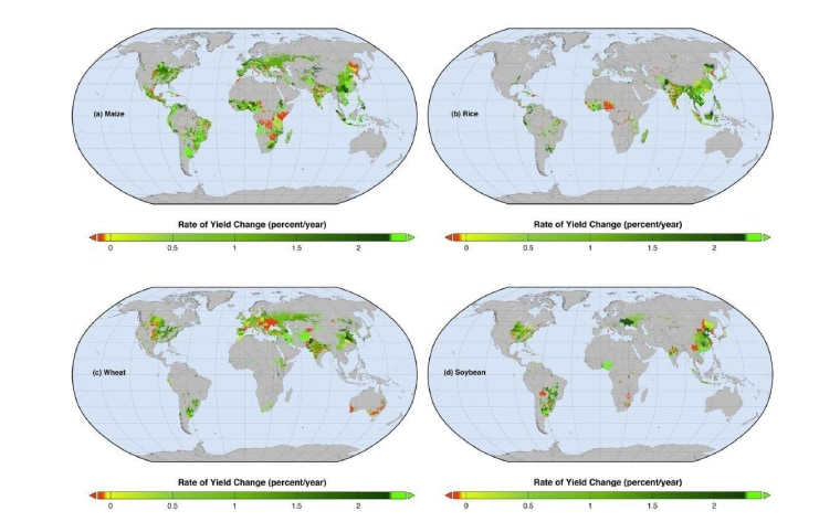 Global map of current percentage rates of changes in (a) maize, (b) rice, (c) wheat, and (d) soybean yields. Red areas show where yields are declining whereas the fluorescent green areas show where rates of yield increase – if sustained – would double production by 2050.