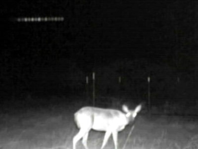 A Texas hunter's infrared camera captures a view of a deer ... and also lights that appear to hover in the sky. Those lights were later traced to a camera glitch. Watch an Aug. 25 video report from KXAS's Omar Villafranca.