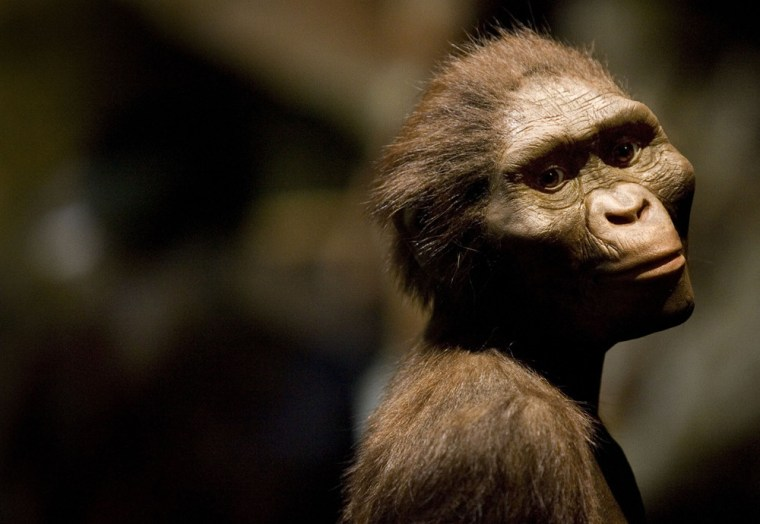 A sculptor's rendering shows how the 3.2-million-year-old hominid called Lucy might have looked in life. A more recently found fossil known as Kadanuumuu is from the same species, but 400,000 years older.