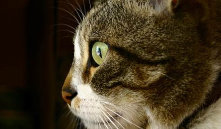 Your cat isn't totally ignoring you -- really!