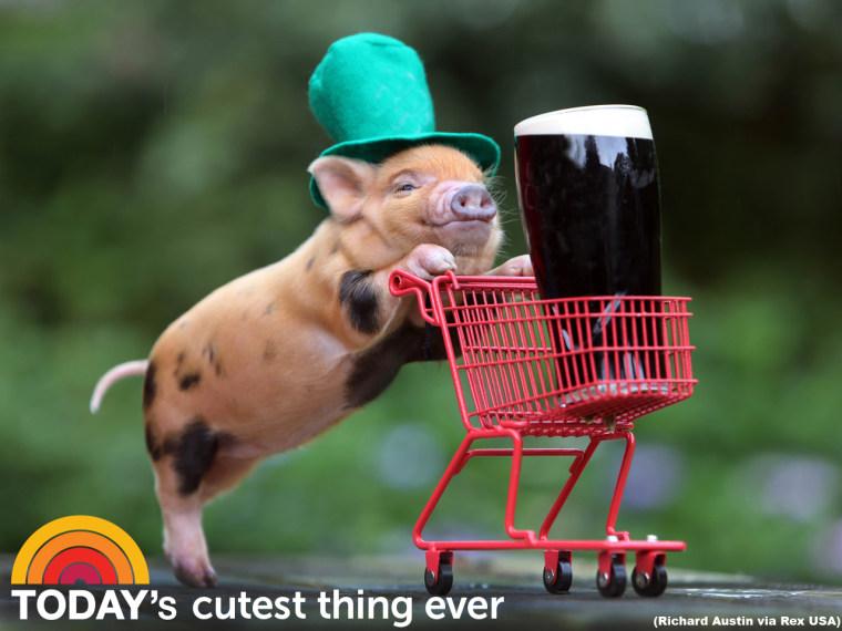 Patty Piggy