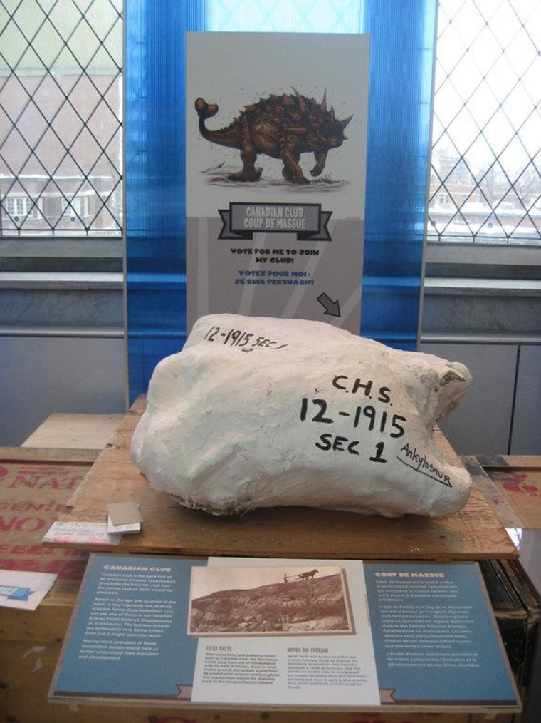 ""\""""Canadian Club,"""" which could be one of the following clubbed ankylosaurs: Euoplocephalus (common), Scolosaurus and Dyoplosaurus (rare). The fossil is one of five featured in the Canadian Museum of Nature's """"Dino Idol"""" contest.""760|1014|?|en|2|f5db976d58618a4b913123b9e3d93d4a|False|UNLIKELY|0.2888352870941162