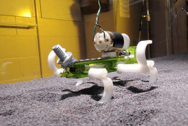 Image of robot lizard