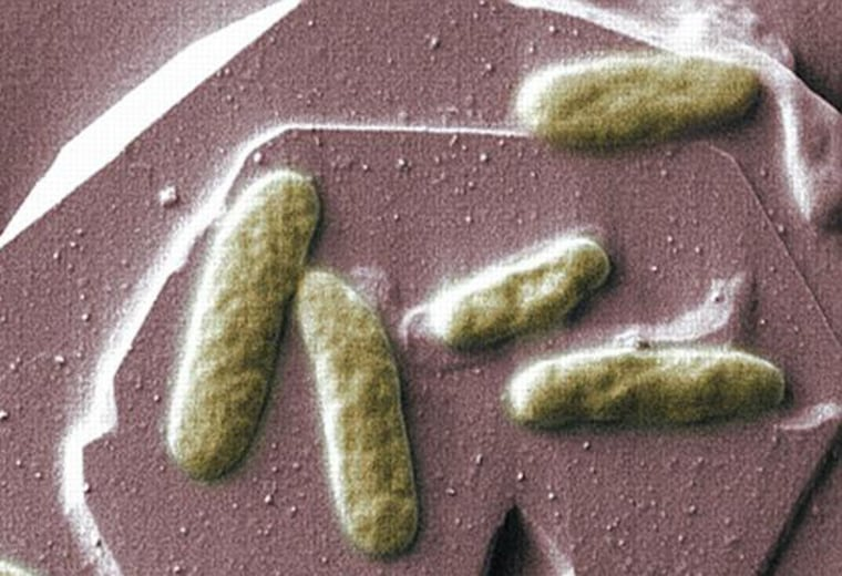 Shewanella oneidensis bacteria can produce electricity on a mineral surface.