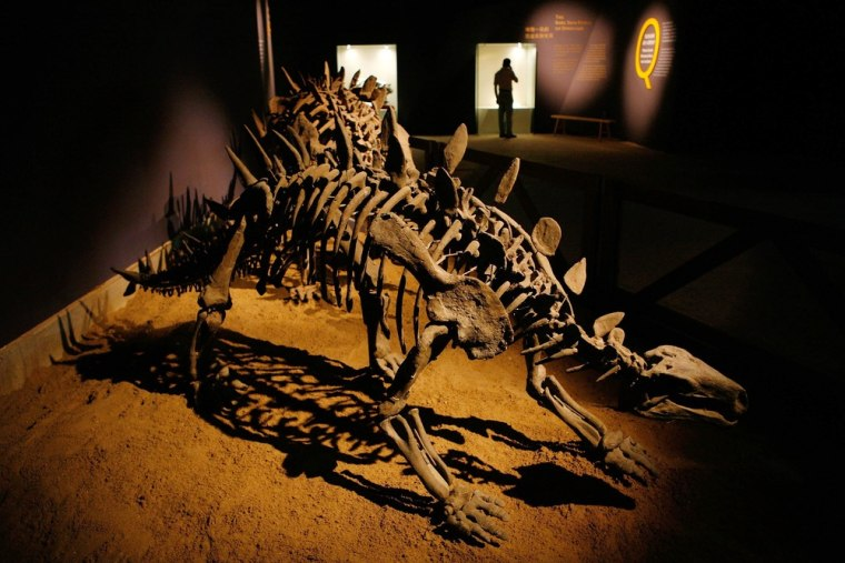 This dinosaur skeleton fossil was part of a dinosaur fossil exhibition at Shanghai Science and Technology Museum in July 2007 in Shanghai, China. Zigong is famous for its dinosaur fossil excavations.
