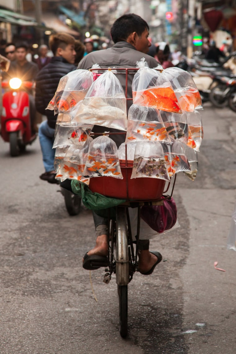 Mobile fish store on bike.