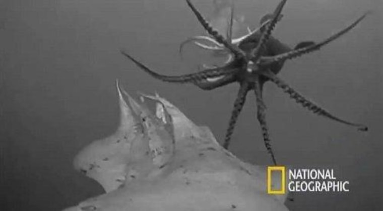 A Crittercam attached to a Humboldt squid captured some amazing footage, as this screengrab shows.