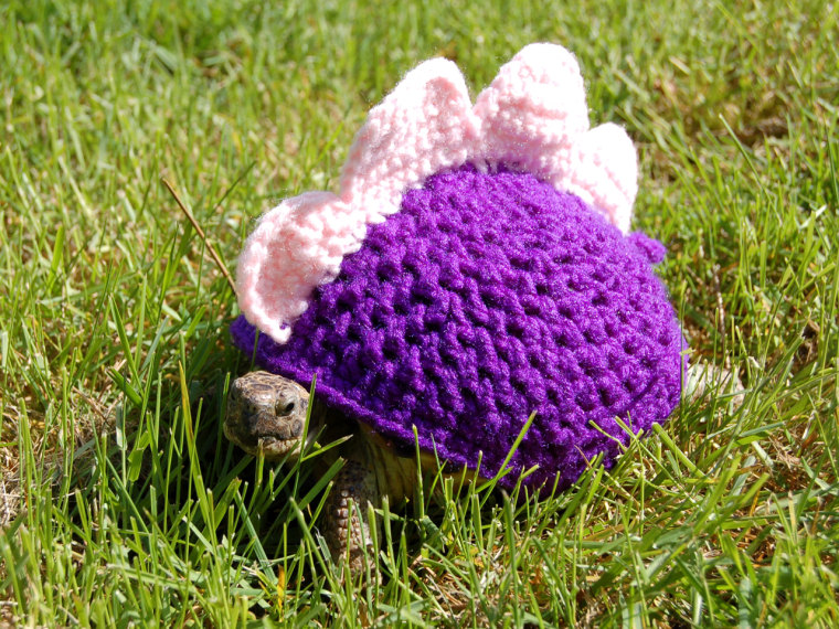 PIC FROM KATIE BRADLEY / CATERS NEWS - (PICTURED: Dinosaur cosy) - Now thats what you call a shell suit! These are the hilarious knitted cosies - desi...