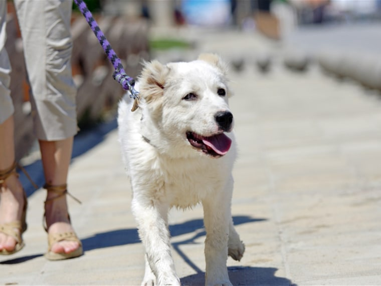 Woman walking a dog