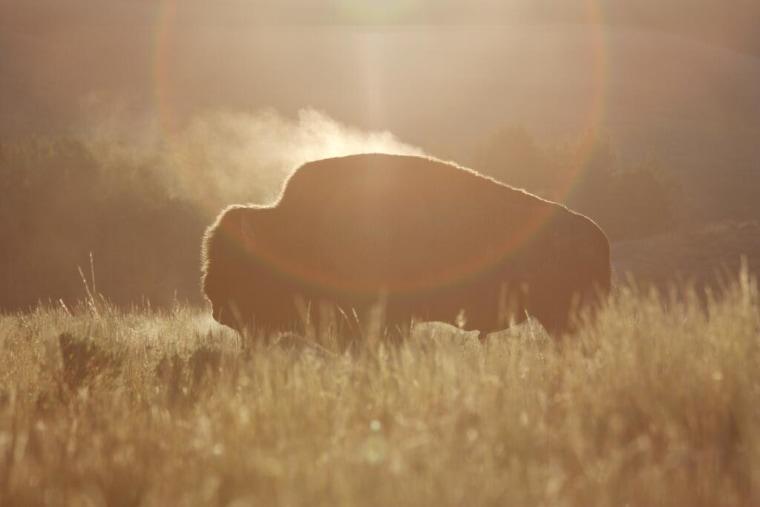 bison geyers