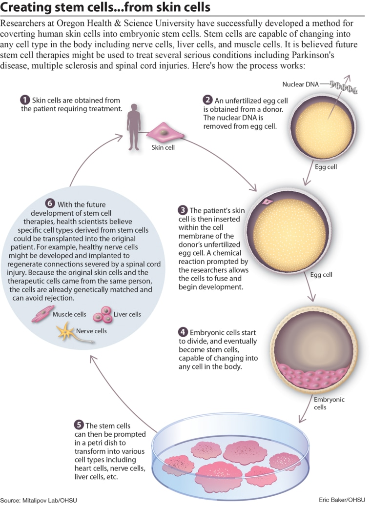 Researchers at Oregon Health & Science University have successfully developed a method for converting human skin cells into embryonic stem cells.