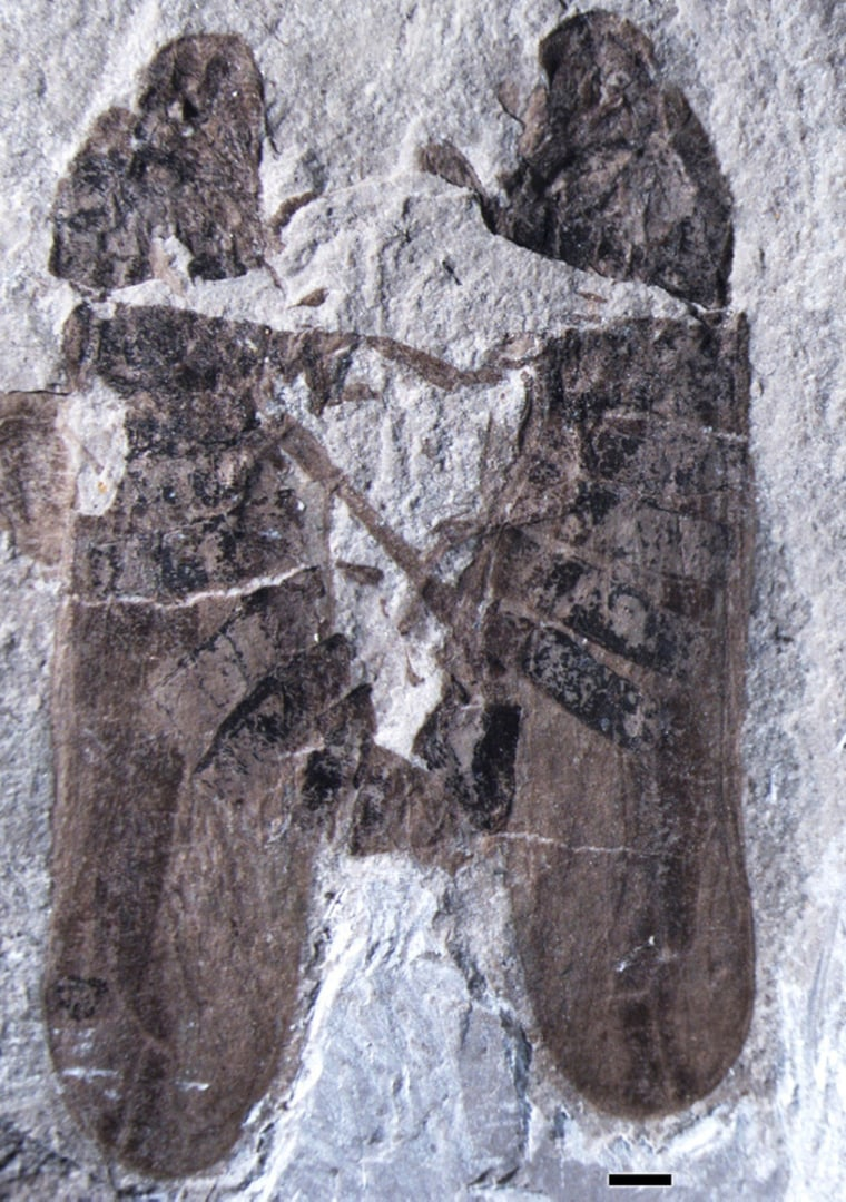Fossil of a male and female froghopper having sex