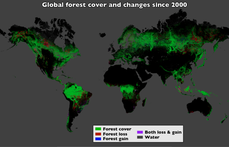 Image of global forest map