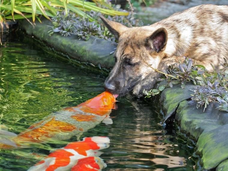 Image: Dog and fish