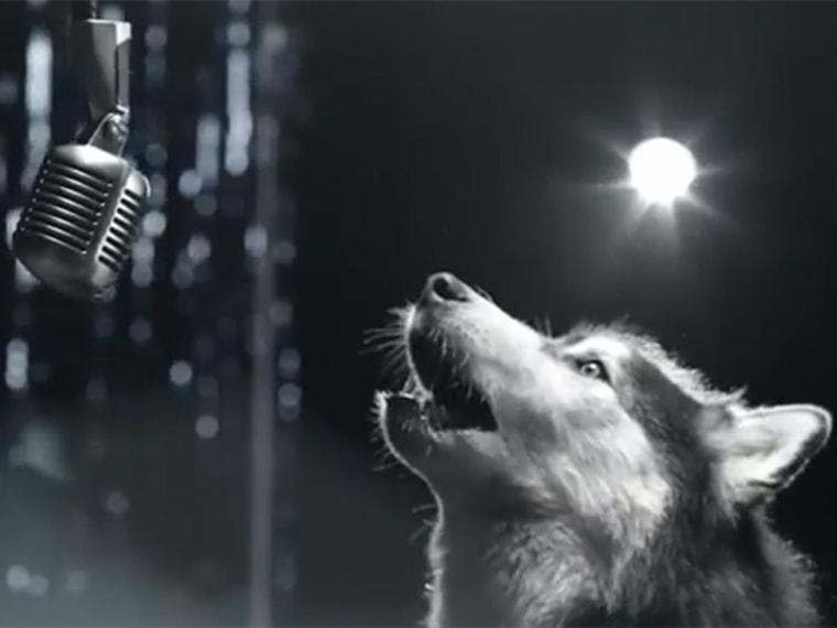 Image: Dog in public service ad