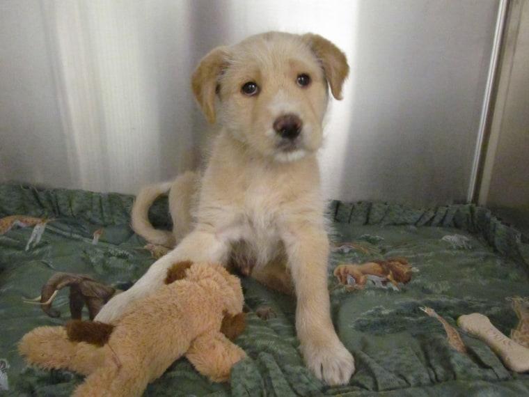 Dallas Animal Services Facebook