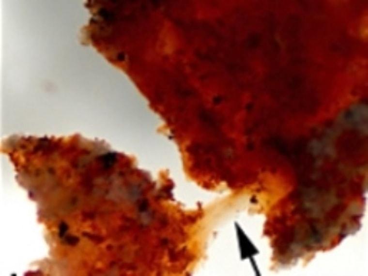 Image: T. rex soft tissue