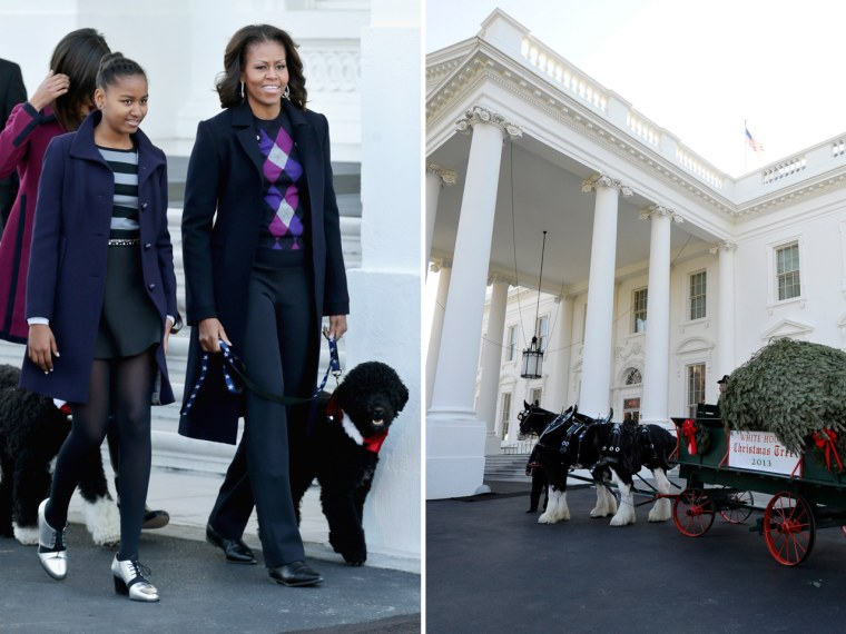 First lady Michelle Obama, her daughters, Sasha and Malia, and dogs, Bo and Sunny, welcomed the arrival of the official White House Christmas tree around 11 a.m.