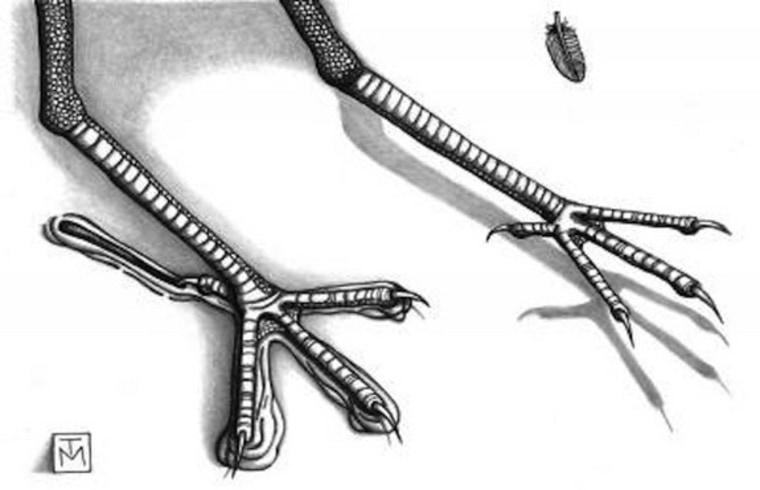 Bird footprints 100 million years old: Oldest ever found in Australia