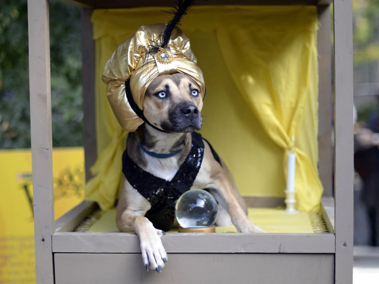 A dog dressed as a Zoltar fortune telling machine participates in the 23rd Annual Tompkins Square Halloween Dog Parade on October 26, 2013 in New York...