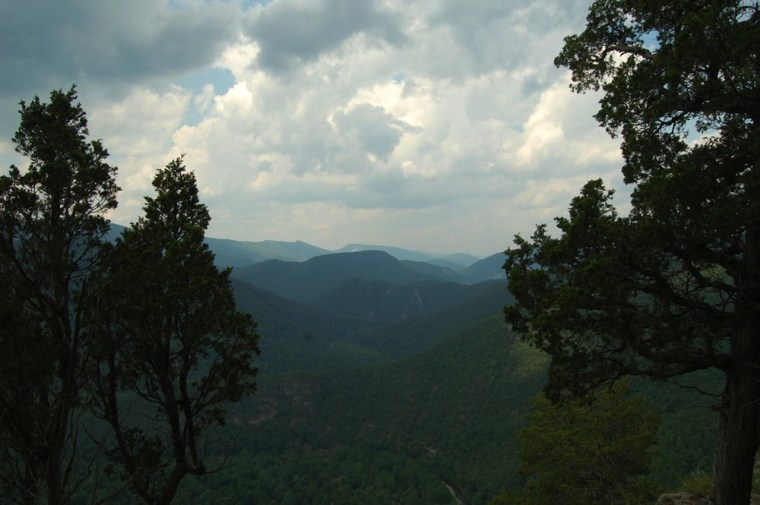 Red cedars (foreground) in the central Appalachian Mountains.