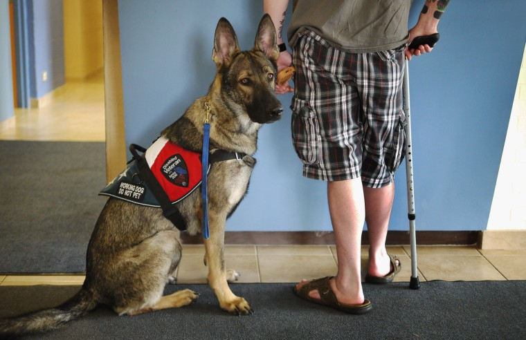 Army veteran Brad Schwarz brings his service dog Panzer for a check up at Southwest Animal Care Center May 3, 2012 in Palos Hills, Illinois. Schwarz uses a service dog to help him cope with post-traumatic stress disorder (PTSD) related to his 2008 tour in Iraq.