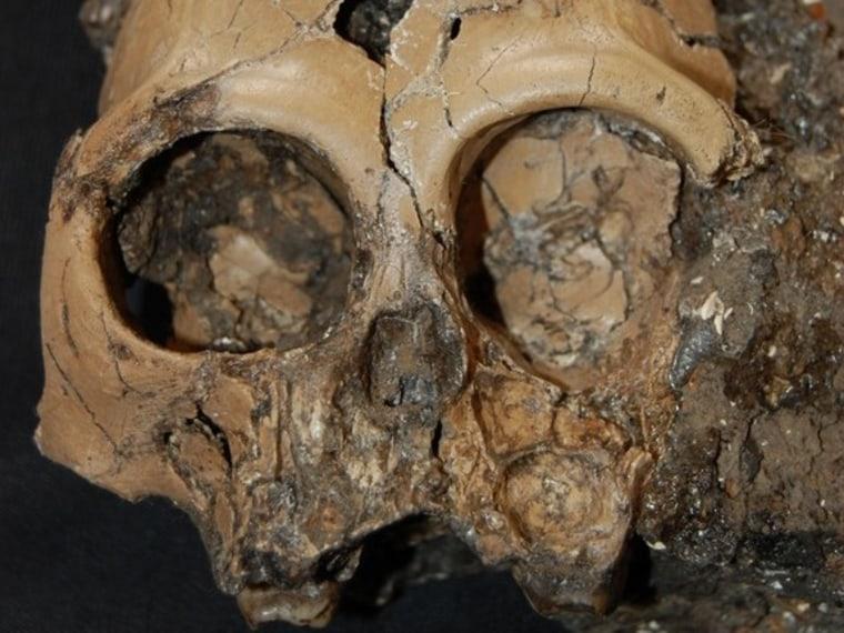 Image: Skull