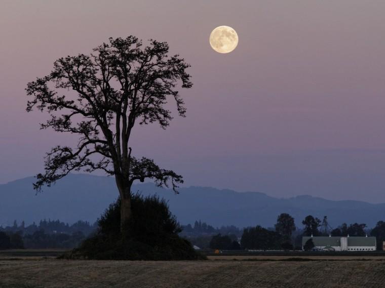 Image: 2012 Harvest Moon