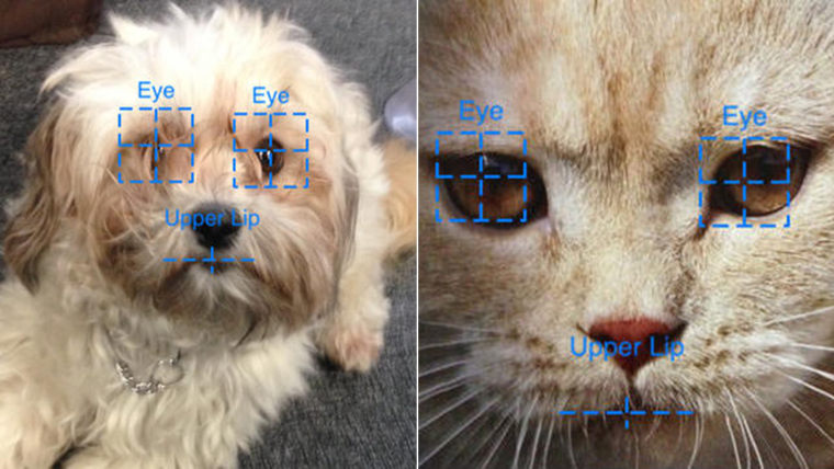 A new app aims to help pet owners find lost animals with the help of facial recognition technology.