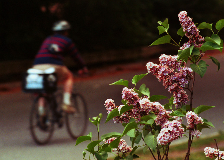 389261 02:  A bicycle rider zips past flowering plants May 14, 2001 in New York Citys Central Park. Pollen counts are particularly high in New York th...
