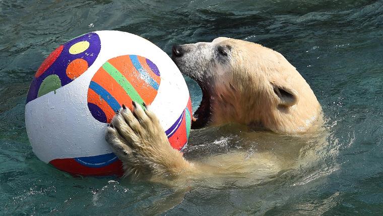 Image: Polar bear playing with an Easter egg ball