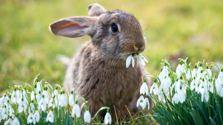Image: Baby bunny eating flowers