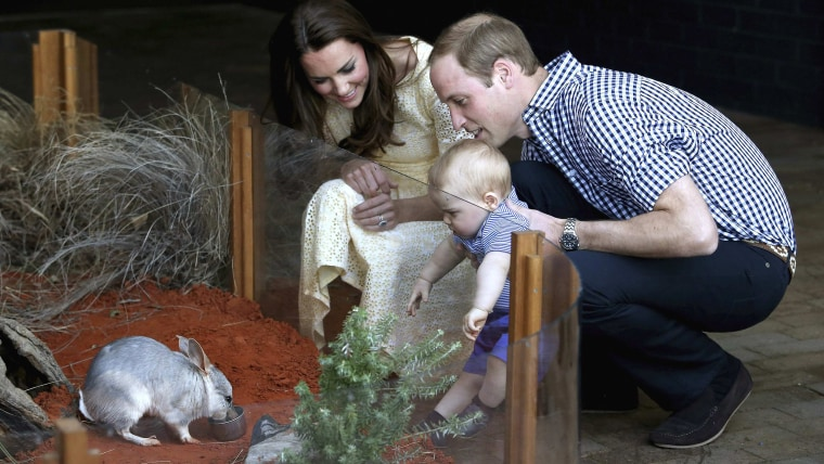 Prince George meets a marsupial named George  Britain's Prince William and his wife Catherine, the Duchess of Cambridge, watch as their son Prince George looks at a Bi...