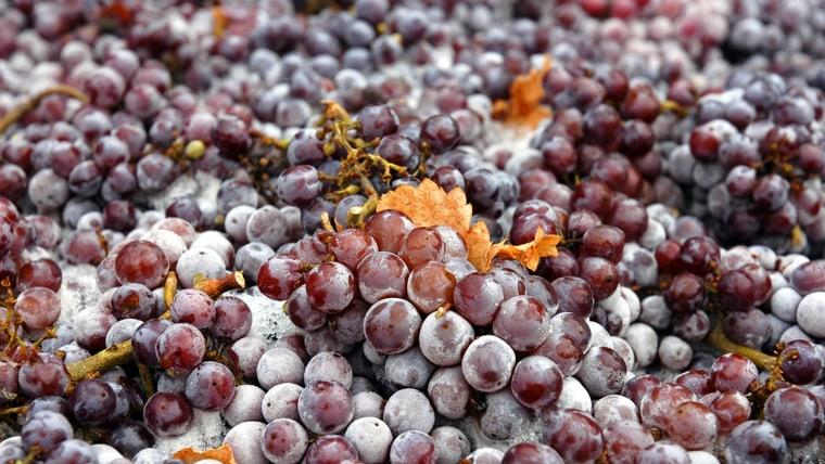 Frozen Pinot Gris grapes