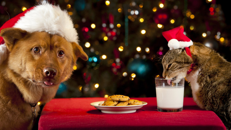 Cat and Dog eating and drinking Santa's cookies and milk.; Shutterstock ID 94887574; PO: today.com