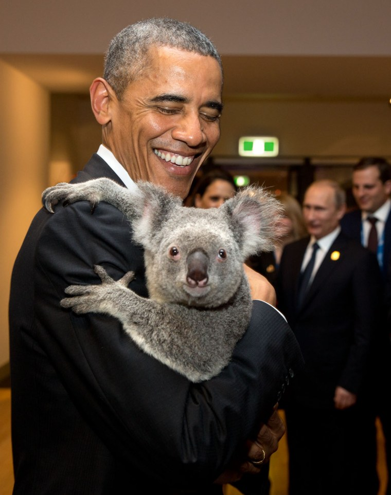 "Nov. 15, 2014 ""The President holds a koala backstage prior to the G20 Welcome to Country Ceremony at the Brisbane Convention and Exhibition Center in ..."