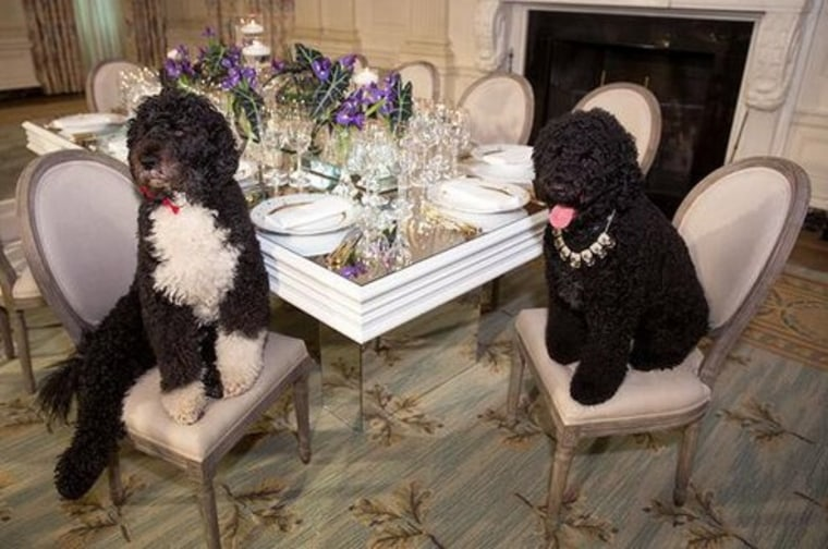 Bo and Sunny get ready for a state dinner at the White House Tuesday, Feb. 11 2014, in a tweet sent by Michelle Obama.
