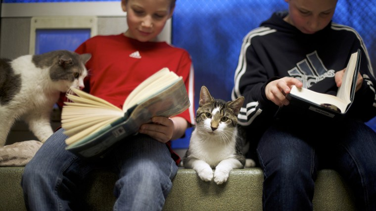 """Seth and Ethan Wiggins (R) read to """"Stewart"""" and """"Tyler,"""" cats up for adoption, as part of """"The Book Buddies Program"""" at the Animal Rescue League of B..."""