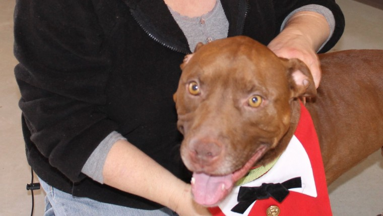 Soldier the pit bull and his new owner.