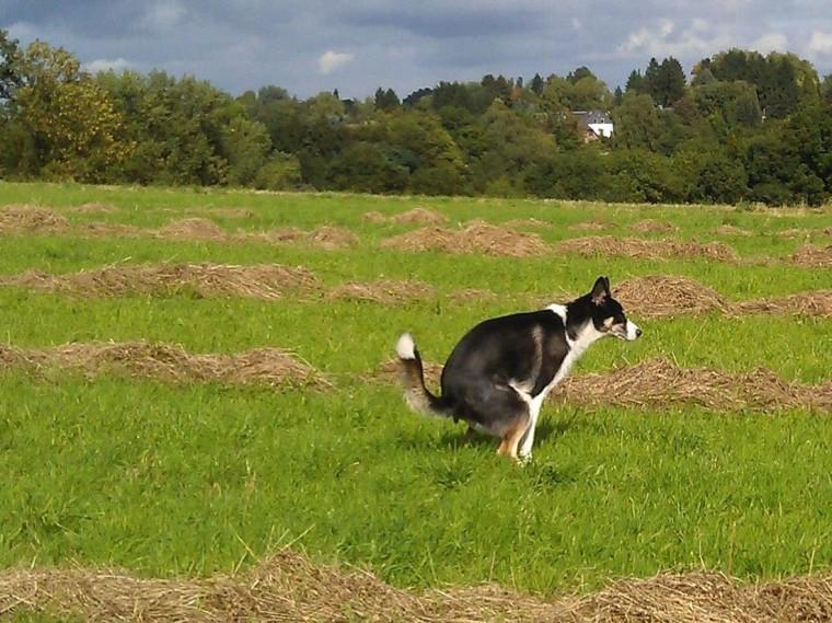 Image: Pooping dog