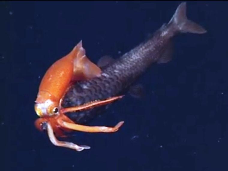 Image: Squid vs. fish