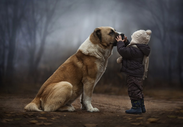 Shumilova's son, Vanya, with one of the family's dogs.