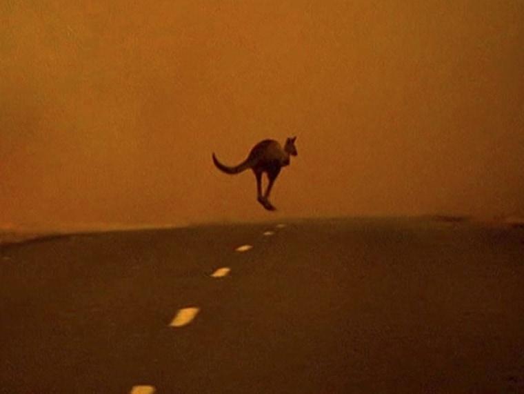 Image: Kangaroo and fire