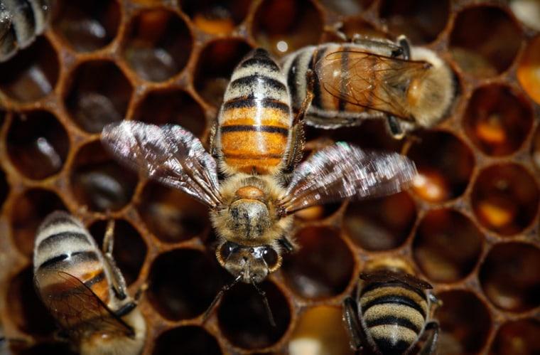Image: Honeybees