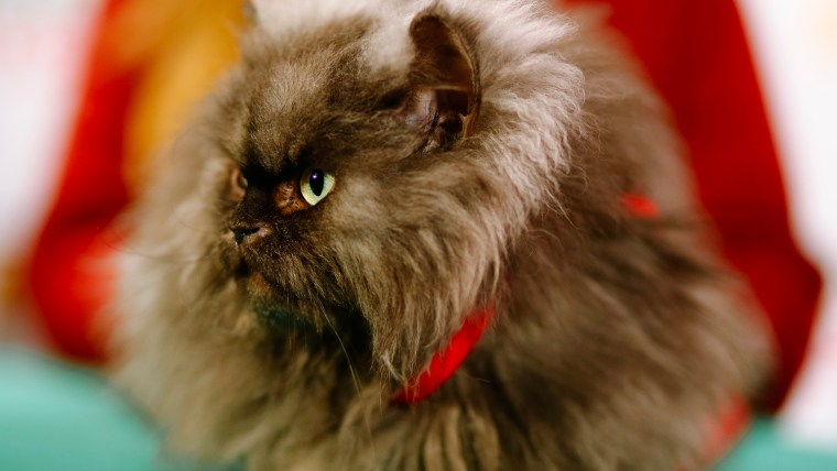 Colonel Meow has passed away.
