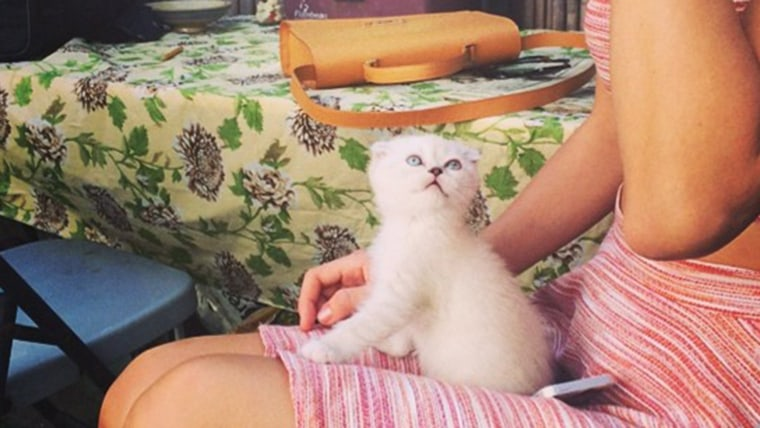 Taylor Swift Names New Kitten After Mariska Hargitays Law Order